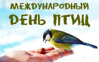 День птиц в 2022 году