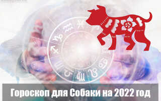 Гороскоп на 2022 год для Собаки