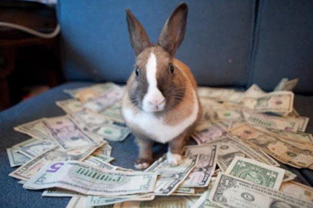 кролик и деньги