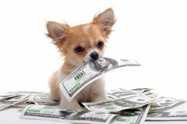 собака и деньги