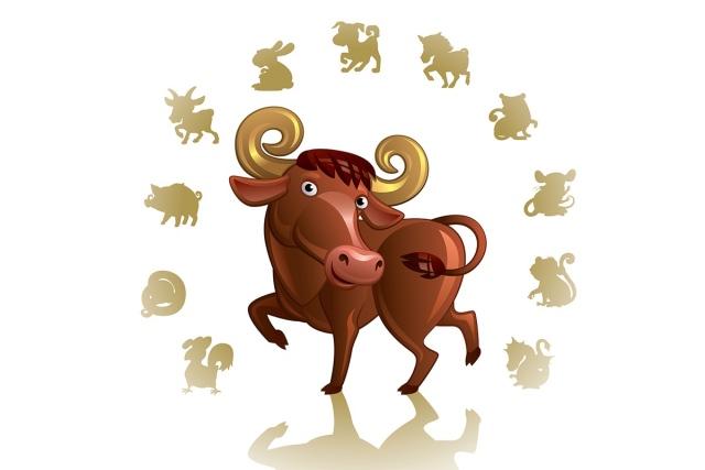 совместимость быка с другими знаками